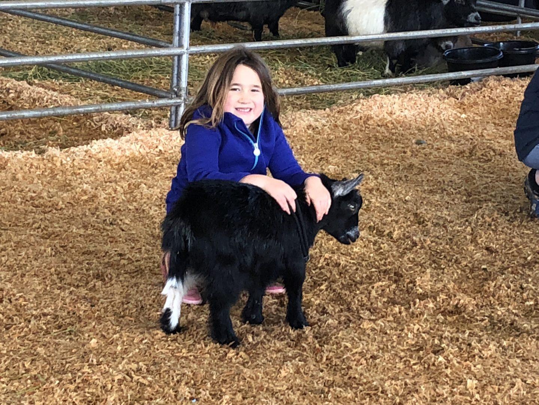 Junior Pygmy Goat Show Entry