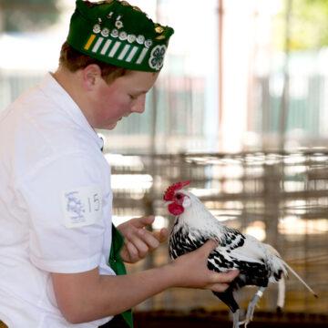 junior-poultry-show