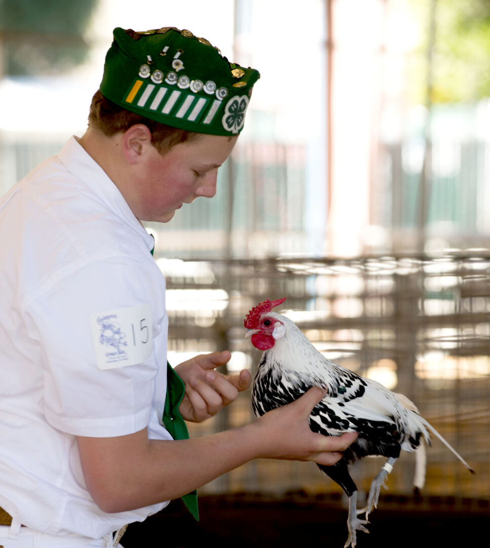 Junior Poultry Show Entry